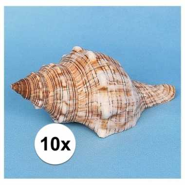 Feest 10x stuks decoratie schelpen trapezium 14 cm