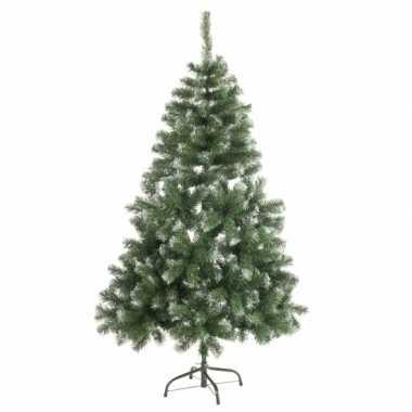 Abies kerstboom met witte uiteinden