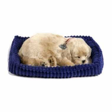 Feest slapende golden retriever puppy