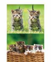 Feest 2x dieren magneten 3d kittens