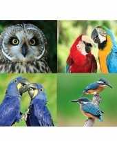 Feest 4x dieren magneten vogels