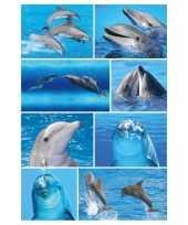 Feest 72x dolfijnen dieren stickers