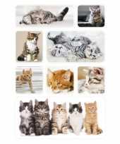 Feest 72x poezen katten kittens dieren stickers
