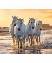 Feest cadeau paardenliefhebber poster galopperende groep witte paarden