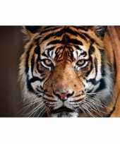 Feest cadeau tijger liefhebber poster 84 x 59 cm
