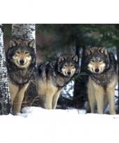 Feest decoratie poster grijze wolven