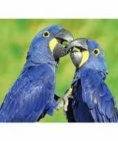 Feest dieren magneet 3d ara papegaai