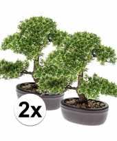 Feest ficus mini bonsai nepplant 32 cm 2 stuks