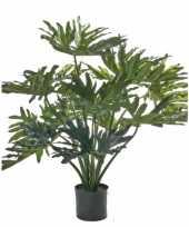 Feest philo selloumplant 80 cm groot