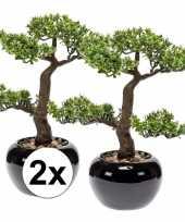 Feest pilea bonsai nepplant 34 cm 2 stuks
