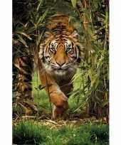 Feest poster siberische tijger 91 x 61 cm