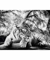 Feest poster tijger 61 x 91 5 cm wanddecoratie
