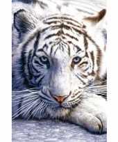 Feest poster witte tijger 61 x 91 cm